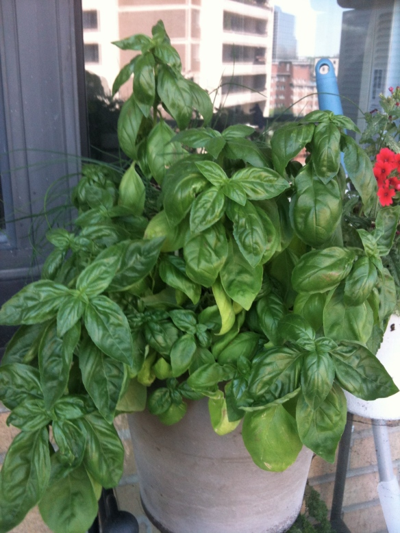 Photo of balcony basil